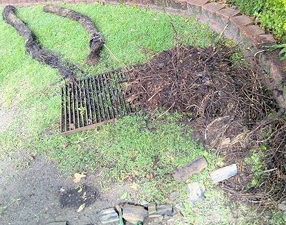 Tree Roots in Sewer Drains 3